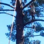 Palm Tree Removal Menlo Park, Tree Trimmers Palo Alto