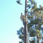 Menlo Park Tree Removal, Palo Alto Tree Trimming