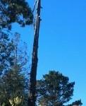 Tree Service Menlo Park, Arborist Palo Alto