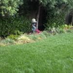 Lawn Aeration Menlo Park, Lawn Service Palo Alto,