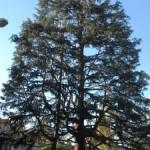 Tree Service Palo Alto Ca, Tree Services Menlo Park