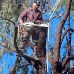 Palo Alto Tree Service, Palm Tree Removal Menlo Park