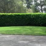 Lawn Services Menlo Park, Palo Alto Lawn Service