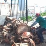 Tree Removal Palo Alto, Tree Service Menlo Park
